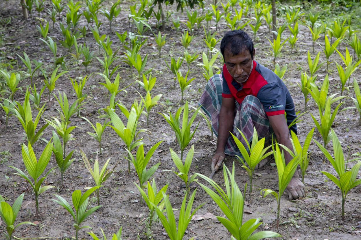 "In Tarabunia village, Pirojpur district, more and more farmers have turned to the ""sarjan"" method of farming to cultivate a variety of produce from vegetables to seasonal fruits. This is in response to the rapidly changing climate."