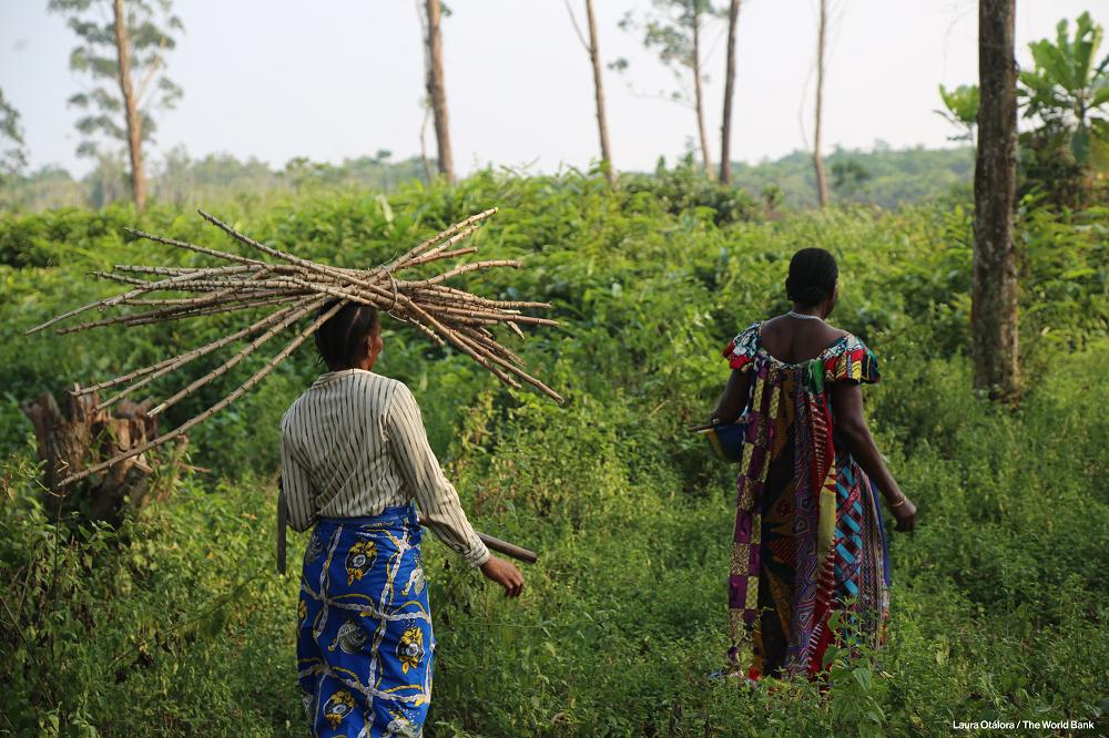 """Résultat de recherche d'images pour """"plantation  forêt congo"""""""""""