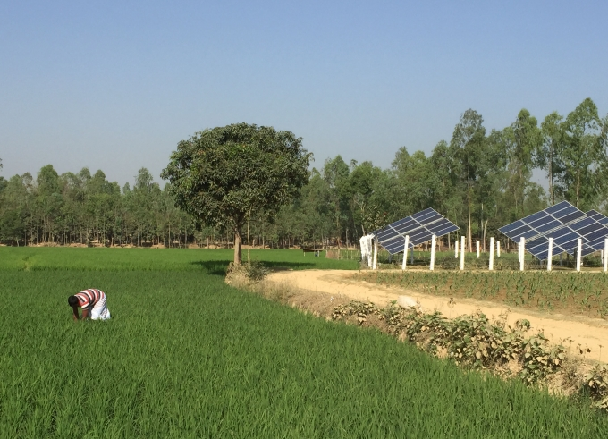 Solar Irrigation Pumps in Bangladesh