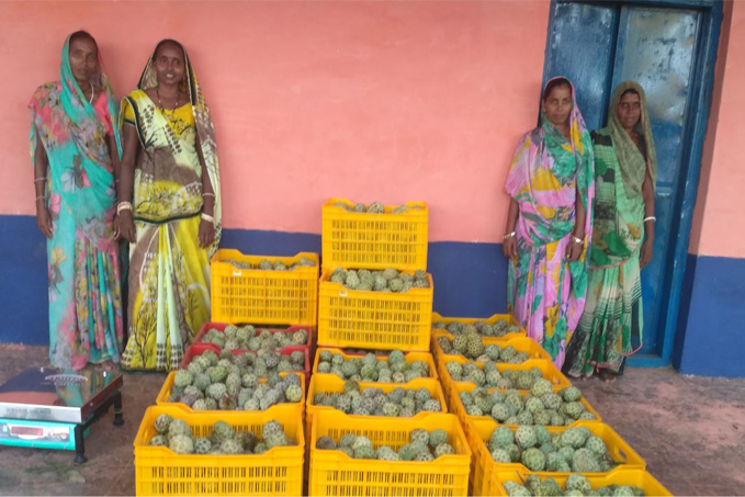 Women at the custard apple collection centre