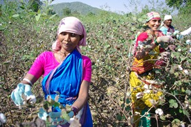 Organic cotton farmers, Golamunda village in Orissa, 2010