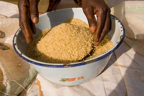 Rice grains in bowl. Photo: Arne Hoel | The World Bank