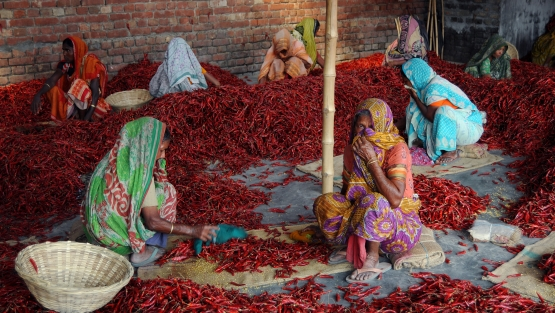 Women chili workers are busy working in chili field playin a great role in their family economy. Courtesy of Photoshare.