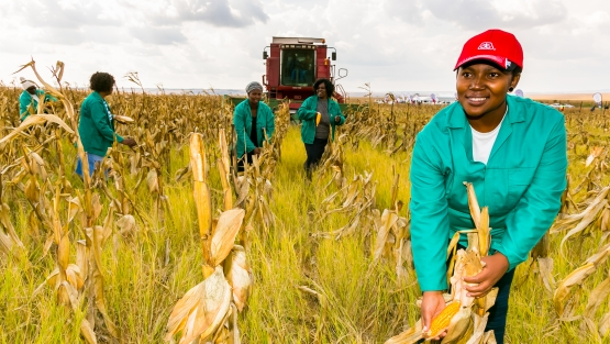 Commercial Maize Farming in South Africa. Credit: By Sunshine Seeds/Shutterstock