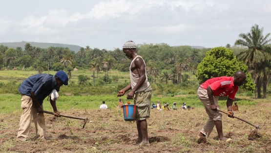 Farmers working in their fields in Guinea