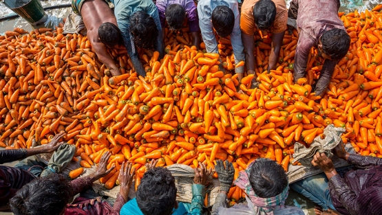 Farmers wash carrots after harvest in Dhaka, Bangladesh. Photo: Jahangir Alam Onuchcha / Shutterstock.com