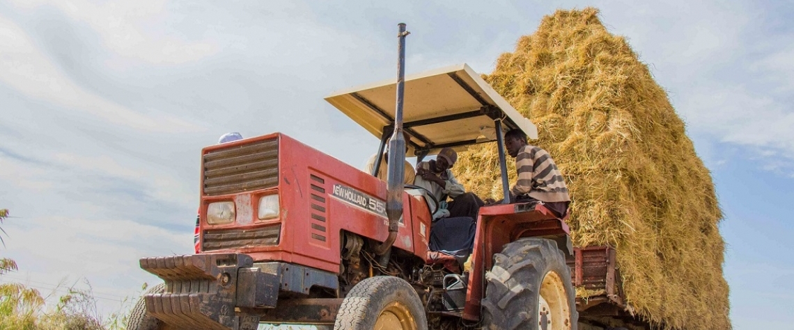 Men operate a tractor piled high with straw bales in Northern Senegal. Local rice production in the area soared after the installation of a new irrigation system.