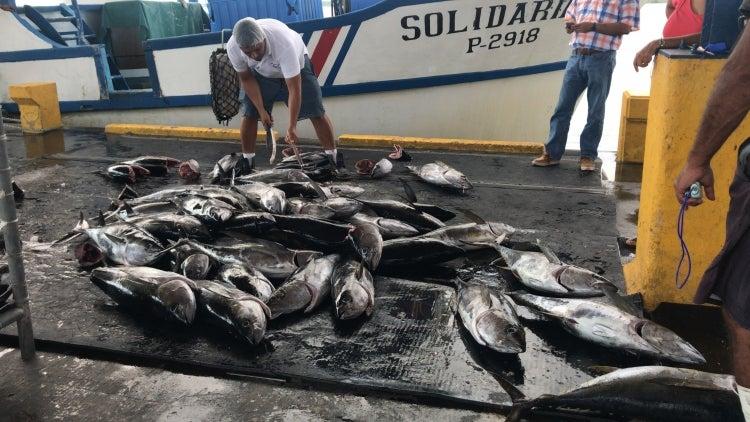 Tuna processing plant in Puntarenas, Costa Rica. Photo: Víctor Fernández Rojas/Incopesca