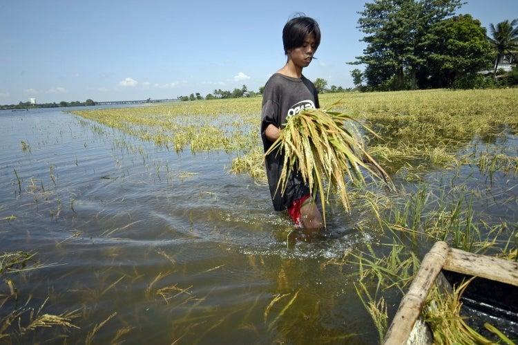 Man walking through a flooded rice field. © Nonie Reyes/World Bank