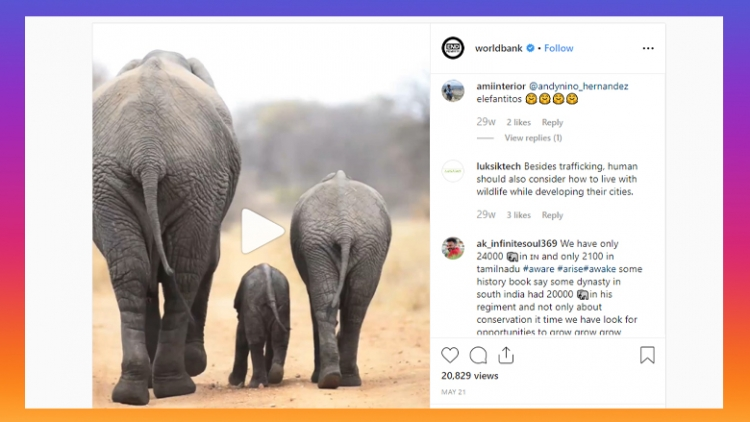 Instagram post showing a video of a family of elephants.