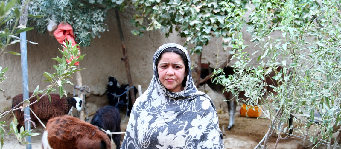 A woman with her livestock. Program beneficiaries received cows, sheep or goats. Photo: © Microfinance Investment Support Facility for Afghanistan
