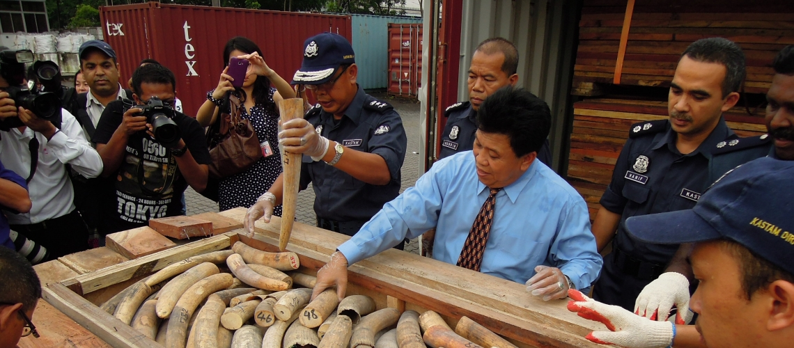 The Selangor State Customs Director Dato' Azis Yacub with its largest ever seizure of ivory in transit through the country, finding 1,500 pieces of tusks hidden in wooden crates purpose-built to look like stacks of sawn timber. The ivory, stashed in 10 crates which were divided between two containers, were shipped from the port of Lomé in Togo and were headed to China. © Elizabeth John/TRAFFIC