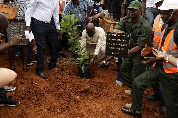 The Deputy Minister of Agriculture, Forestry and Food Security planting a tree on behalf of President Julius Maada Bio. (Photo credit: Asad Naveed