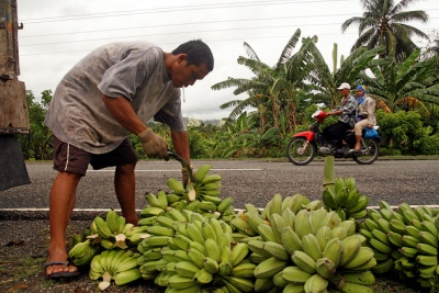 Man arranging bananas by the road. Malita, Davao City, Philippines. Photo - Kate Bacungco / World Bank