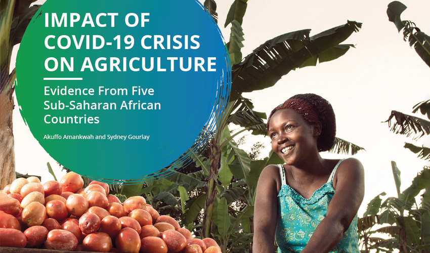 Impact of COVID-19 Crisis on Agriculture: Evidence from Five Sub-Saharan African Countries