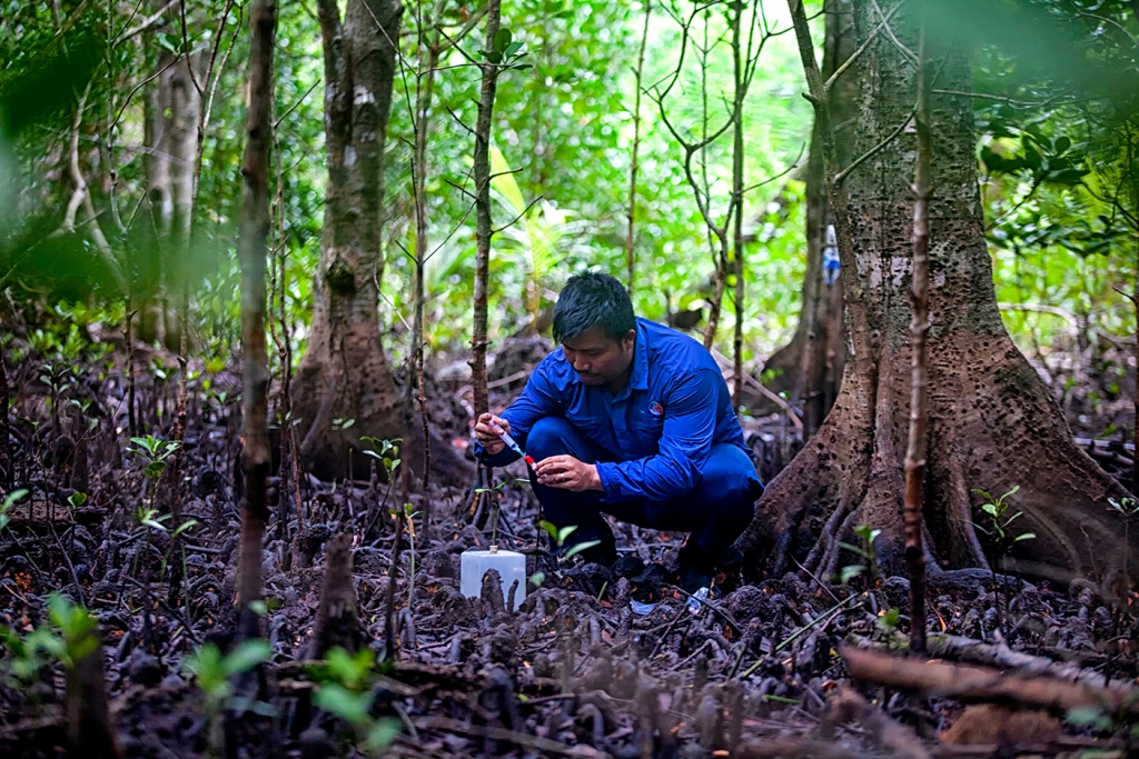 Collecting much needed data in Indonesia's mangrove forests—Indonesia is home to an extensive network of mangroves which protect coastlines and provide important fish breeding grounds. Photo: LIPI