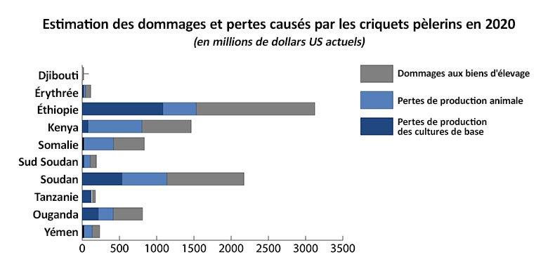 L'invasion de criquets pèlerins pourrait causer des dommages économiques dévastateurs dans les pays. © Stephen D'alessandro, Banque mondiale