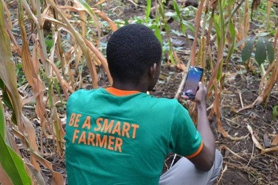 A local farmer utilizing the Ujuzi Kilimo sensors to collect data.