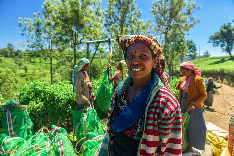 Women at a tea plantation in Nuwara Eliya, Sri Lanka.