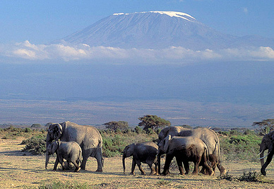 Elephants with Mount Kilimanjaro in the distance. Curt Carnemark / World Bank