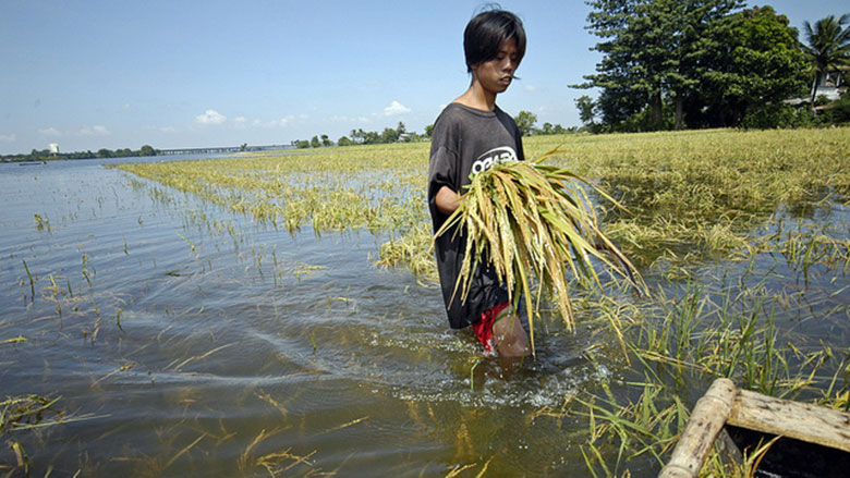 A man walks through a flooded rice field. © Nonie Reyes/World Bank