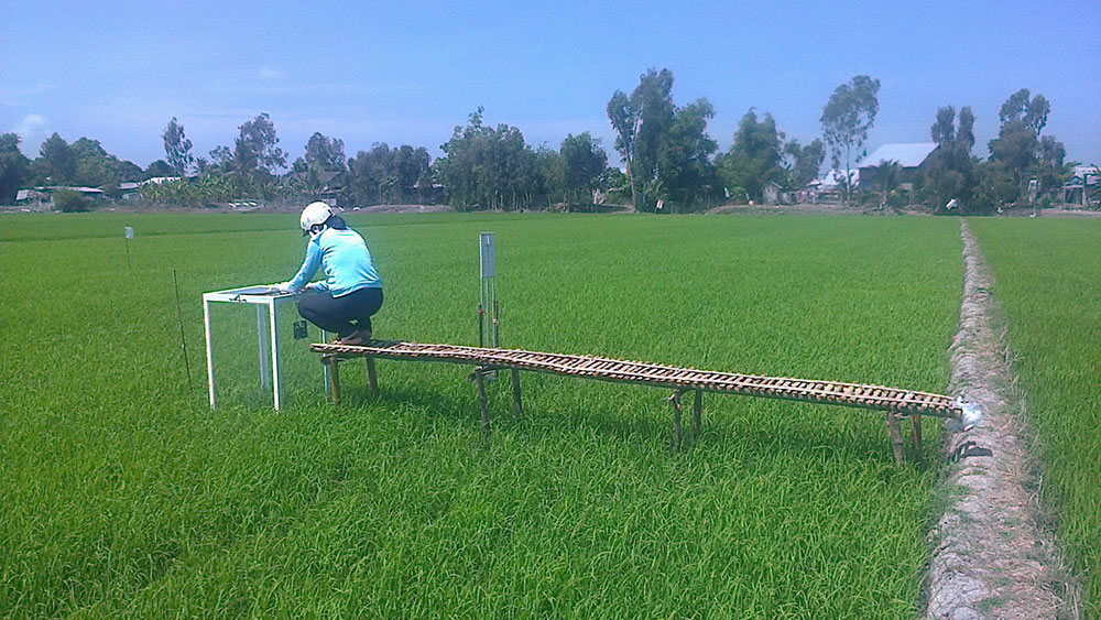 A woman measures greenhouse gas emissions on a rice farm in Vietnam.